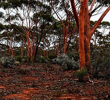 Salmon Gums by V1mage