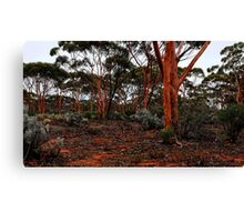 Salmon Gums Canvas Print