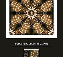 Mushrooms by Janet Schaefer