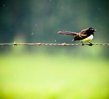 Bird on a wire in rain by crystalsbubble