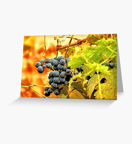 Grape Vines in Autumn Greeting Card