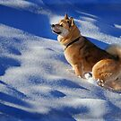 Let it Snow, Let it Snow, Let it Snow. by JRScalzo