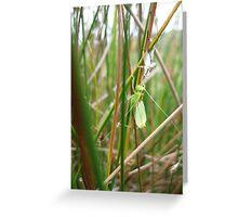 grasshopper reflecting Greeting Card