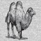 Bactrian Camel by taiche