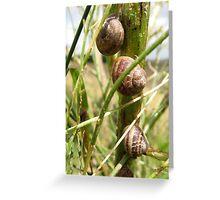 Three snails on a stalk Greeting Card