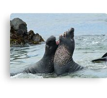 Elephant seals sparing on the beach Canvas Print