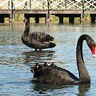 The Swanpranos by SeeingTime