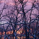 Colors Over a Winter Sky by Karen K Smith