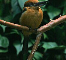 Kingfisher by Jen Millard