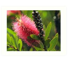 Beauty in the wilds of Tasmania Art Print
