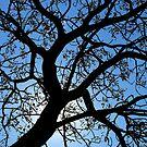 Bathurst Tree by SeeingTime