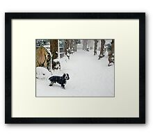 Lost without his master Framed Print