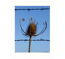 Vegetal jail nature Art Print
