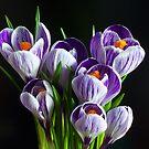 Magical Flowers Calendar by seawhisper