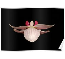single orchid Poster