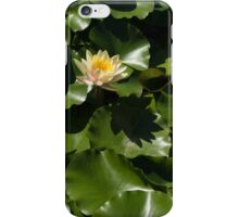 Exotic Colored Waterlilies in the Hot Mediterranean Sun iPhone Case/Skin