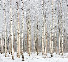 7th of December by Juha M. Kinnunen