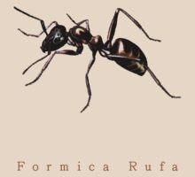 Formica Rufa or just Ant by Lenoirrr