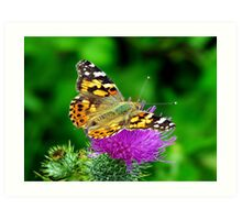 Painted Lady Butterfly on thistle. Art Print