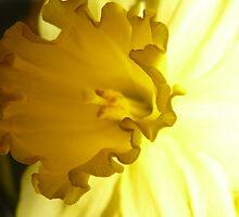 Easter Flowers by nikki harrison