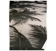 Shadows of Palm Trees on White Sand Beach Tropical Belize Island Poster
