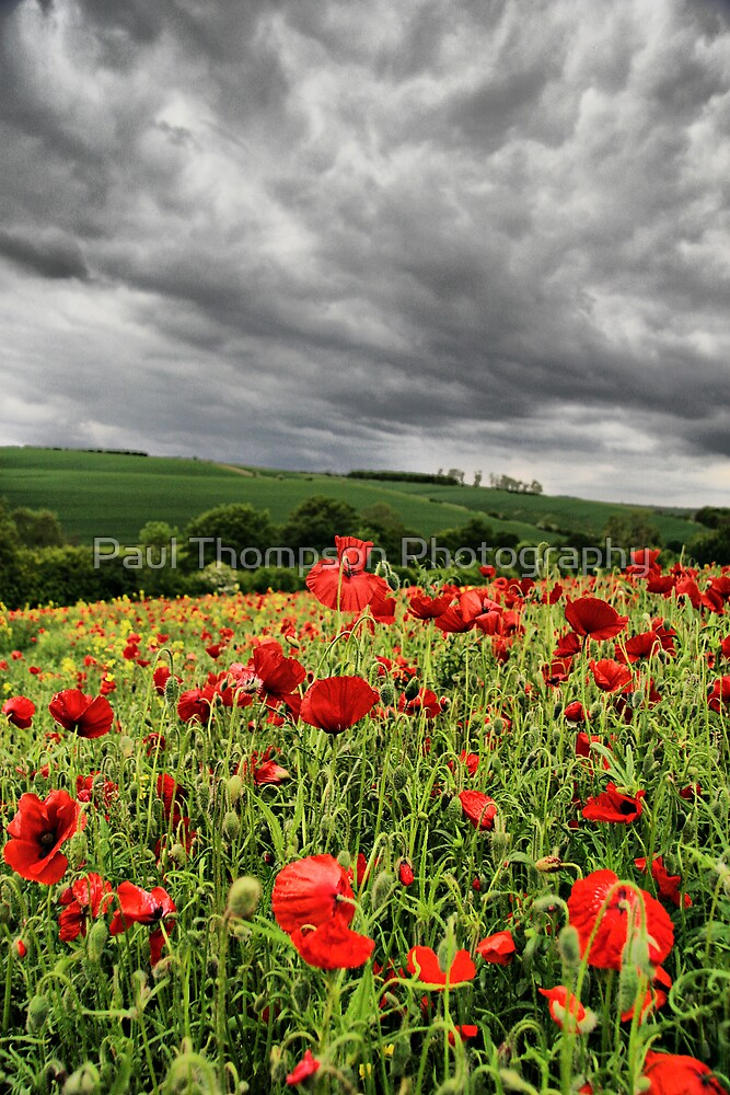 Poppies by Paul Thompson Photography