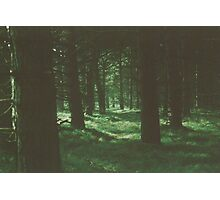 Dark Green Forest Photographic Print