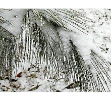 Cascades Photographic Print