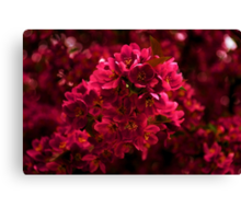 Impossibly Pink - Impressions Of Spring Canvas Print