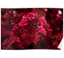 Impossibly Pink - Impressions Of Spring Poster
