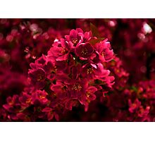Impossibly Pink - Impressions Of Spring Photographic Print