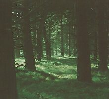 Dark Green Forest by Debja