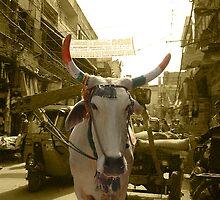 Delhi Bull by Christopher Dunn