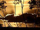 """""""Sepia Sunburst"""" by debsphotos"""