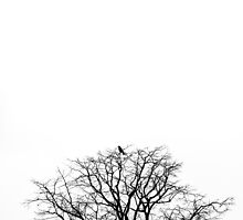 THE CROW by Julia Aufschnaiter