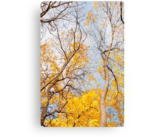 Yellow autumn leaves on trees  Canvas Print
