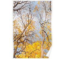 Yellow autumn leaves on trees  Poster