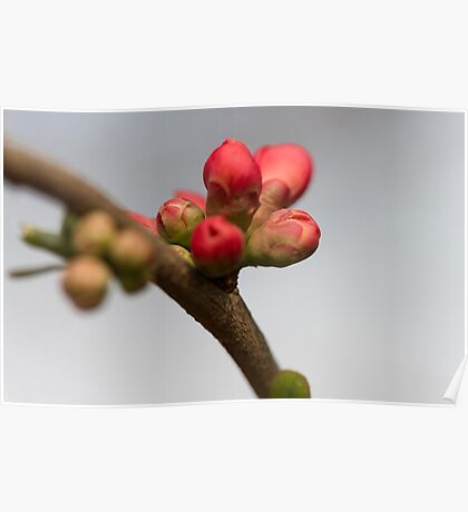 pink flowers in bloom on tree Poster