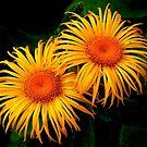********FABULOUS FLOWERS********