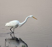 """""""Asian"""" Great Egret by Dave Rollins"""