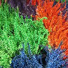 COLOURS IN A POT - SOLD by Colleen2012