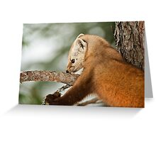 Pine Marten Greeting Card