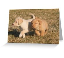 Yellow Lab Puppies Greeting Card