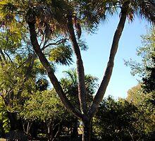 Trinity Palm by Donna Adamski