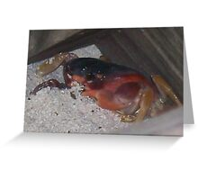 Caribbean Crab Hidding in the Sand Greeting Card