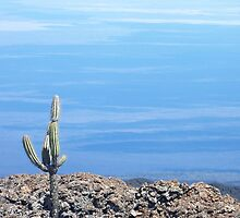 Atop a inactive volcano in the Galapagos Islands (Espanola Island) by evon