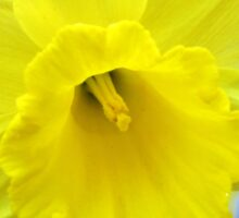 Vibrant Golden Daffodil Sticker