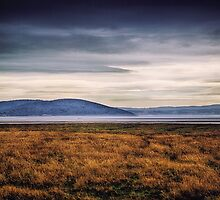 Tranquility in the Grey by Vicki Field