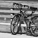 Bicycle by Jeff Lowe