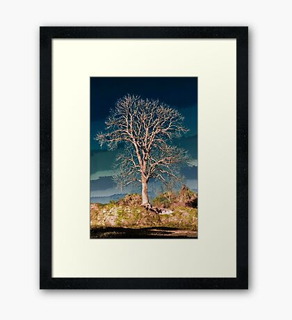 King's tree Framed Print